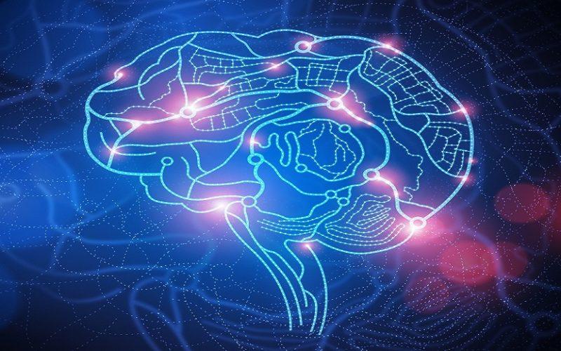 L'obésité accélère le vieillissement du cerveau